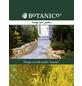Lebensbaum occidentalis Thuja »Jantar«-Thumbnail