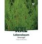 Lebensbaum occidentalis Thuja »Smaragd«-Thumbnail