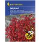 KIEPENKERL Leinkraut, Linaria maroccana, Samen, Blüte: rot-Thumbnail