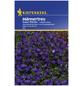 KIEPENKERL Männertreu, Lobelia erinus, Samen, Blüte: blau-Thumbnail