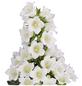 GARTENKRONE Makedonische Glockenblume, Campanula formanekiana »Mary Mee White«, Blüte: weiß-Thumbnail