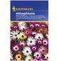 KIEPENKERL Mittagsblume, Dorotheanthus bellidiformis, Samen, Blüte: mehrfarbig-Thumbnail