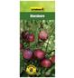 GARTENKRONE Moosbeere Vaccinium macrocarpon-Thumbnail