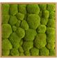 Moosbild Eichenrahmen Ballenmoos Apfelgrün, BxHxT: 55 x 55 x 6  cm-Thumbnail