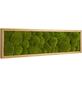 Moosbild Eichenrahmen Ballenmoos Apfelgrün, BxHxT: 70 x 20 x 6  cm-Thumbnail