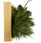 Moosbild Eichenrahmen, BxHxT: 20 x 70 x 8 cm, grün-Thumbnail