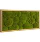 Moosbild Eichenrahmen, BxHxT: 27 x 57 x 6 cm, grün-Thumbnail