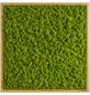 Moosbild Eichenrahmen, BxHxT: 55 x 55 x 6 cm, grün-Thumbnail