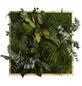 Moosbild Eichenrahmen, BxHxT: 55 x 55 x 8 cm, grün-Thumbnail