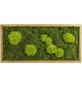 Moosbild Eichenrahmen, BxHxT: 57 x 27 x 6 cm, grün-Thumbnail