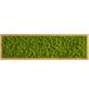 Moosbild Eichenrahmen Islandmoos Apfelgrün, BxHxT: 20 x 70 x 6  cm-Thumbnail