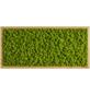 Moosbild Eichenrahmen Islandmoos Apfelgrün, BxHxT: 57 x 27 x 6  cm-Thumbnail