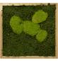 Moosbild Eichenrahmen Wald- und Ballenmoos, BxHxT: 35 x 35 x 6 cm-Thumbnail