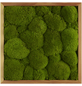 Moosbild Lärchenrahmen Ballenmoos Apfelgrün, BxHxT: 35 x 35 x 6  cm-Thumbnail