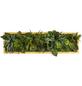 Moosbild Lärchenrahmen, BxHxT: 20 x 70 x 8 cm, grün-Thumbnail