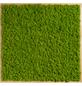 Moosbild Lärchenrahmen, BxHxT: 35 x 35 x 6 cm, grün-Thumbnail