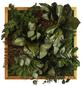 Moosbild Lärchenrahmen, BxHxT: 35 x 35 x 8 cm, grün-Thumbnail