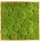 Moosbild Lärchenrahmen, BxHxT: 55 x 55 x 6 cm, grün-Thumbnail