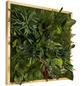 Moosbild Lärchenrahmen, BxHxT: 55 x 55 x 8 cm, grün-Thumbnail