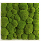 Moosbild weißer Rahmen Ballenmoos Apfelgrün, BxHxT: 55 x 55 x 6  cm-Thumbnail