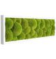 Moosbild weißer Rahmen Ballenmoos Apfelgrün, BxHxT: 70 x 20 x 6 cm-Thumbnail