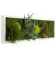 Moosbild weißer Rahmen, BxHxT: 20 x 70 x 8 cm, grün-Thumbnail