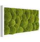 Moosbild weißer Rahmen, BxHxT: 27 x 57 x 6 cm, grün-Thumbnail