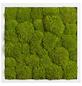 Moosbild weißer Rahmen, BxHxT: 35 x 35 x 6 cm, grün-Thumbnail