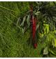 Moosbild weißer Rahmen , BxHxT: 35 x 35 x 8 cm, grün-Thumbnail