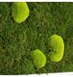 Moosbild weißer Rahmen, BxHxT: 55 x 55 x 6 cm, grün-Thumbnail