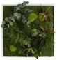 Moosbild weißer Rahmen, BxHxT: 55 x 55 x 8 cm, grün-Thumbnail