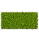 Moosbild weißer Rahmen, BxHxT: 57 x 27 x 6 cm, grün-Thumbnail
