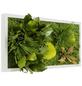 Moosbild weißer Rahmen, BxHxT: 57 x 27 x 8 cm, grün-Thumbnail