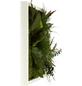 Moosbild weißer Rahmen Dschungel , BxHxT: 35 x 35 x 8 cm-Thumbnail