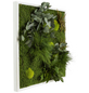 Moosbild weißer Rahmen Dschungel , BxHxT: 55 x 55 x 8 cm-Thumbnail