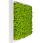 Moosbild weißer Rahmen Islandmoos Apfelgrün, BxHxT: 57 x 27 x 6  cm-Thumbnail