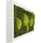 Moosbild weißer Rahmen Wald- und Ballenmoos, BxHxT: 20 x 70 x 6 cm-Thumbnail