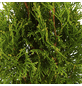 GARTENKRONE Nadelgehölz »Thuja occidentalis«-Thumbnail