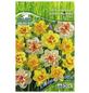 PEGASUS Narzisse pseudonarcissus Narcissus-Thumbnail