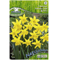 KIEPENKERL Narzisse pseudonarcissus Narcissus-Thumbnail
