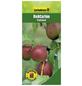 GARTENKRONE Nektarine, Prunus persica var. Nucipersica »Fantasia«, Früchte: süß, zum Verzehr geeignet-Thumbnail