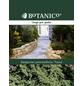 Niederer Zwergwacholder Juniperus procumbens »Nana«-Thumbnail