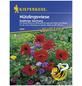 KIEPENKERL Nützlingswiese, Samen, Blüte: mehrfarbig-Thumbnail