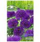 PEGASUS Pegasus Allium Purple Sensation, Lila, 8 Stück-Thumbnail