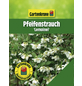 GARTENKRONE Pfeifenstrauch, Philadelphus »Lemoinei«, weiß, winterhart-Thumbnail