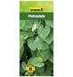 GARTENKRONE Pfeifenwinde, Aristolochia macrophylla, Blüten: creme-Thumbnail