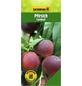 GARTENKRONE Pfirsich, Prunus persica »Cardinal«, Früchte: süß, zum Verzehr geeignet-Thumbnail