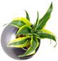 Pflanzen in Keramik Ball, anthrazit, BxHxT: 12 x 12 x 22  cm-Thumbnail