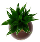 Pflanzen in Keramik Ball, braun, BxHxT: 12 x 12 x 22  cm-Thumbnail