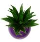 Pflanzen in Keramik Ball, violett, BxHxT: 12 x 12 x 22  cm-Thumbnail